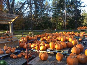 woodstock zucche pumpkin halloween